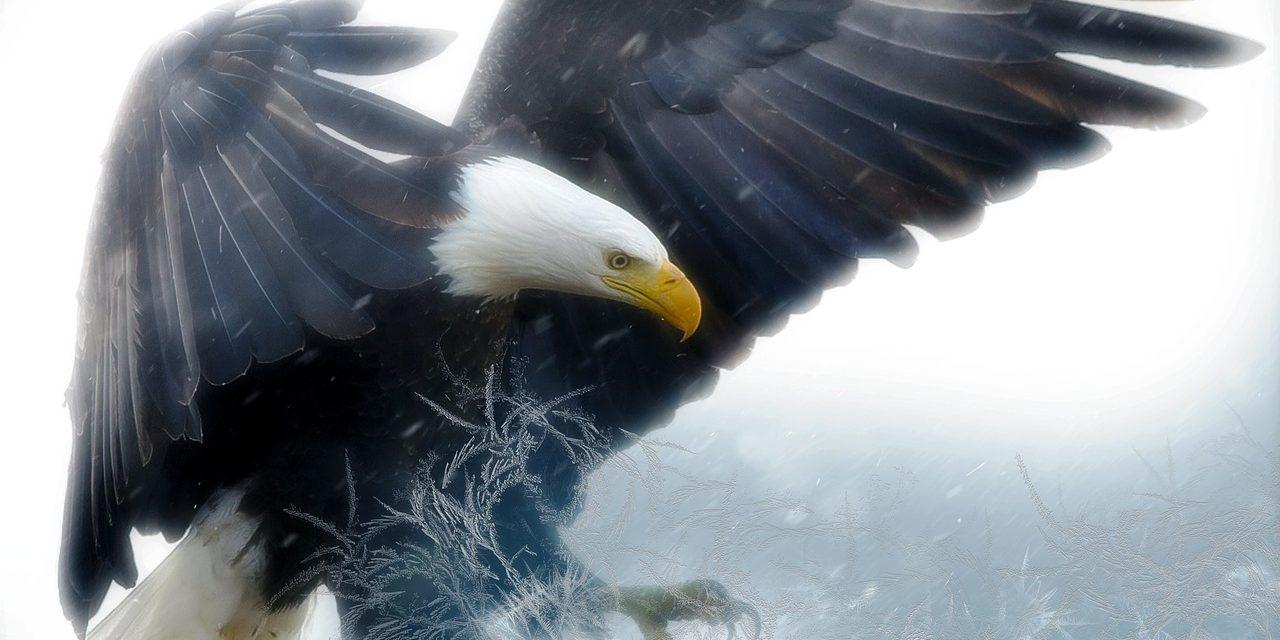 bald-eagle-2190424_1280